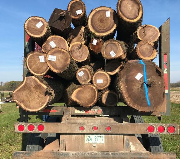 Hauling Logs Away