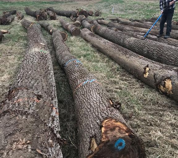 Merchandising Walnut Logs for Sale