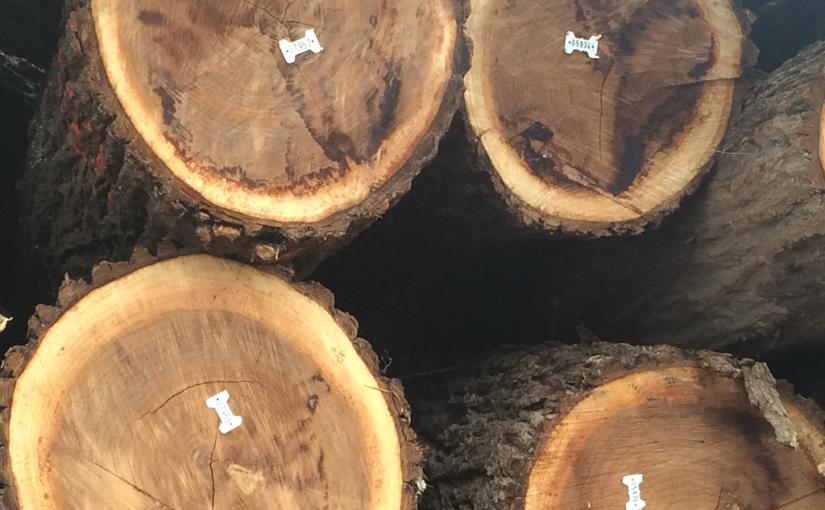 Black Walnut Tree Buyers IA, black walnut tree buyers, black walnut trees, black walnut tree sellers, black walnut log buyers, black walnut timber buyers, black walnut log sellers, black walnut timber sellers, walnut tree buyers, walnut tree sellers, logging companies, logging contractors, loggers