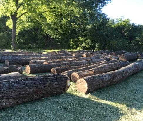 Walnut Timber Buyers | Illinois Loggers | Licensed Timber Buyer in IL