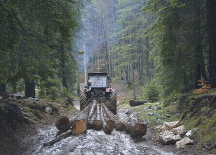 Log Skidder Removing Trees from Forest - Loggers in Illinois - Walnut TImber Buyers