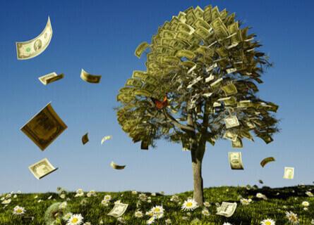 Mature Trees Increase Value of Walnut Tree - IL Logging Companies - Walnut TImber Buyers