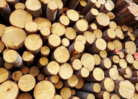 Timber Harvesting Illinois, timber harvesting, log harvesting, tree harvesting, wood harvesting, logging company, logging services, pile of wood, pile of logs, pile of timber