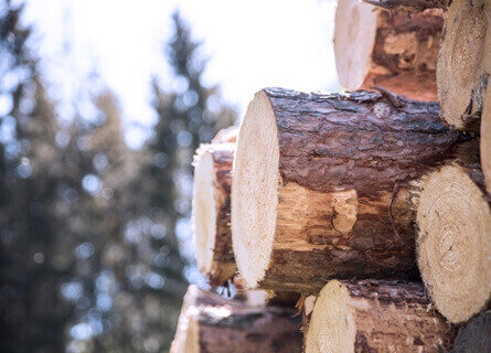 Logging Company Illinois, logging company, logging companies, logging services, logging, timber buying, pile of logs, pile of timber