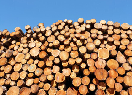 Sell Timber Illinois, sell timber, sell logs, sell wood, sell trees, logging companies, logging services, pile of logs, pile of timber, pile of wood