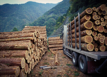 Sell Trees for Lumber Illinois, sell trees for lumber, sell lumber, sell trees, sell logs, sell wood, logging company, logging services