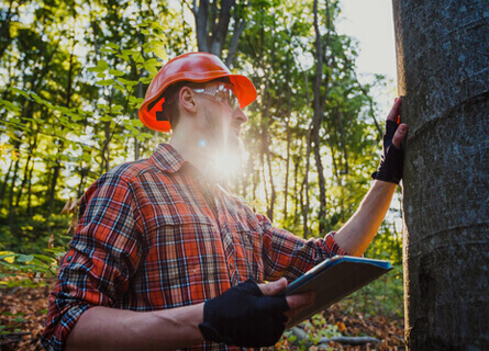 Loggers Illinois, logger, logging, logging services, logging company, inspecting tree, inspecting timber, professional loggers