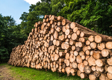 Logging Operations Illinois, logging operations, logging, loggers, logging company, logging services, pile of timber, pile of logs