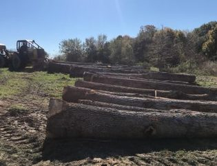 Logs and Skidder
