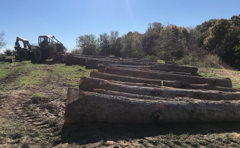 Logging Contractor IA, logging contractor, logging contractors, logging company, logging companies, loggers, logging services, timber buyers, walnut timber buyers, wood buyers, walnut wood buyers, tree buyers, walnut tree buyers, walnut tree sellers, walnut timber sellers, walnut wood sellers