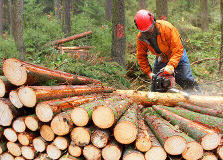 Sell Trees to Timber Company Illinois, sell trees, sell timber, sell tress to timber company, timber company, timber buyers, tree buyers, loggers, logging service