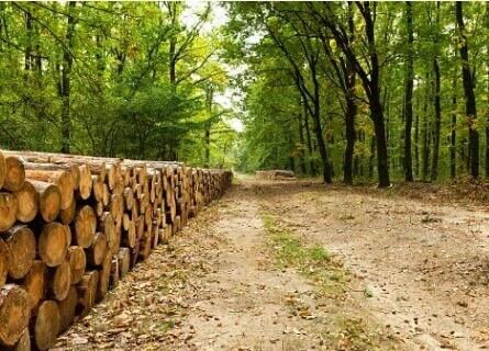 Illinois Logging, logging, loggers, logging timber, logging wood, logging walnut timber, walnut timber, cutting walnut timber, selling walnut timber, buying walnut timber, harvesting timber, harvesting walnut timber, harvesting trees, harvesting walnut trees