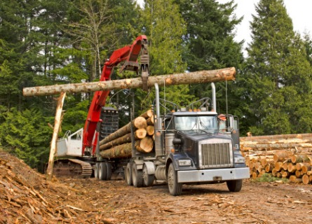 Sell Trees for Lumber IL - Welcome to Walnut Timber Buyers