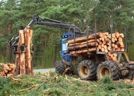 Timber Harvesters IL, timber harvesters, timber harvesting, cutting timber, cutting wood, cutting walnut wood, walnut timber harvesters, walnut timber harvesting, cutting walnut timber, walnut wood, walnut timber, selling walnut timber, selling timber
