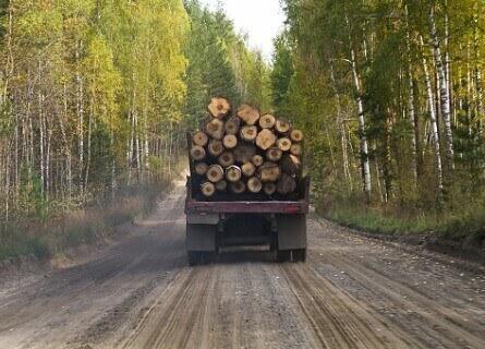 Timber Harvesting IL, timber harvesting, cutting timber, logging timber, timber loggers, loggers, walnut timber harvesting, cutting walnut timber, logging walnut timber, walnut timber, walnut timber buyers, walnut wood