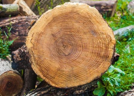 Black Walnut Log Buyers WI - Welcome to Walnut Timber Buyers