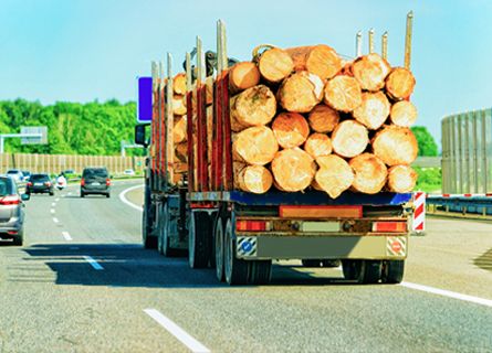 Truck hauling timber as part of walnut logging services in Illinois