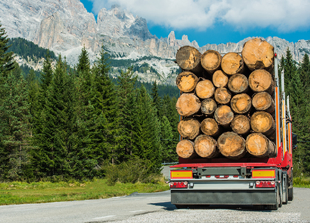 A White Oak Stave Timber Buyer in Illinois transporting logs to a sawmill