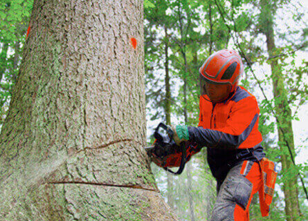 Timber Buyer IL