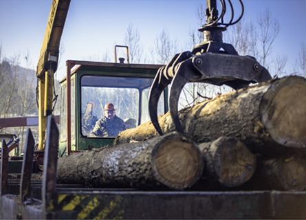 A White Oak Tree Buyer in IL using a crane to move logs onto a platform