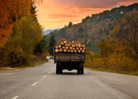 White Oak Tree Buyers in IL transporting logs in a truck