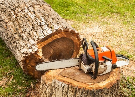 Cut timber from Walnut Log Buyers in Illinois