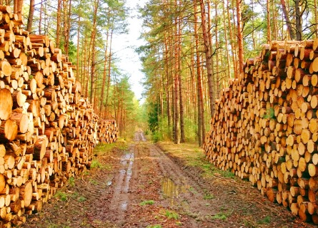 Stacks of timber organized by loggers in IL