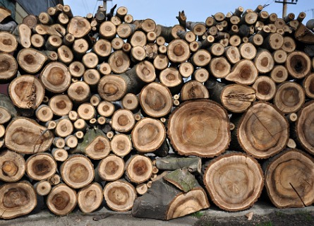Stack of logs from Black Walnut Log Buyers in Missouri