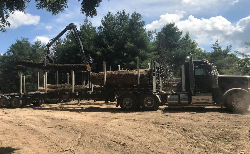 Photo of one of Walnut Timber Buyers' Log Trucks