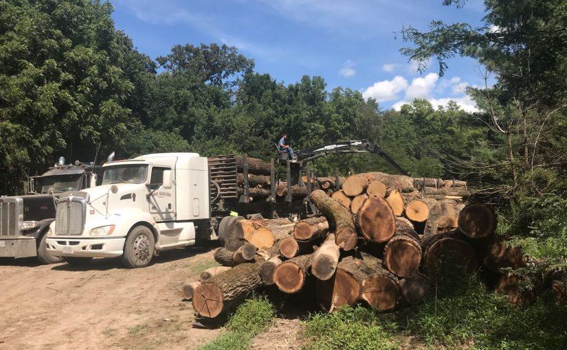 Photo of Walnut Timber Buyers' Log Truck
