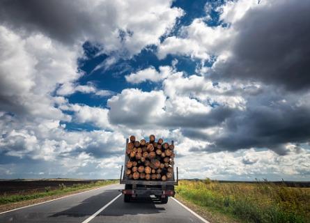 Timber Illinois