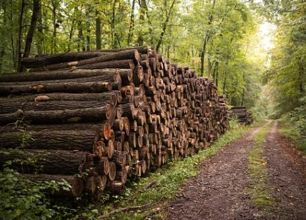 Hardwood Log Supplier