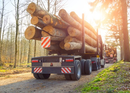 Illinois Walnut Log Supplier