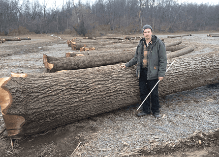 Timber expert standing next to large veneer quality log