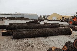 Veneer quality logs in a lumber yard