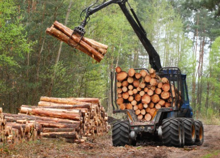 Logging Contractor for Davenport IA collecting cut logs in a forest
