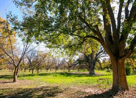 A walnut tree farm in Davenport IA