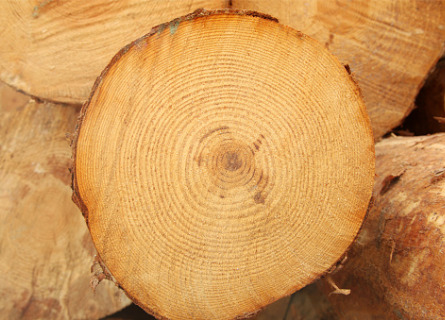Sell Timber Moline IL