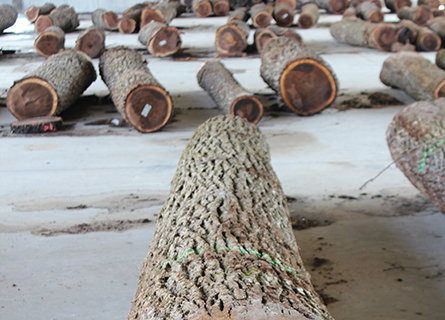 Rows of logs spread out by Logging Contractors in Fulton County IL