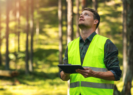 Man inspecting Standing Timber in MO