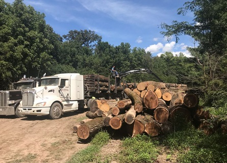 Trucks organizing logs, getting them ready for Selling Timber in Missouri