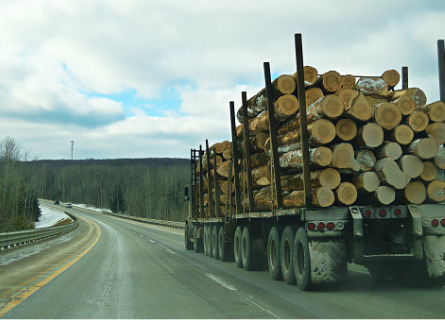 Timber Buyers in MO transporting logs on the highway