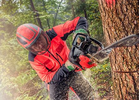 Loggers in Missouri cutting down a tree