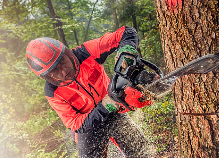 Logger cutting down Standing Timber in MO