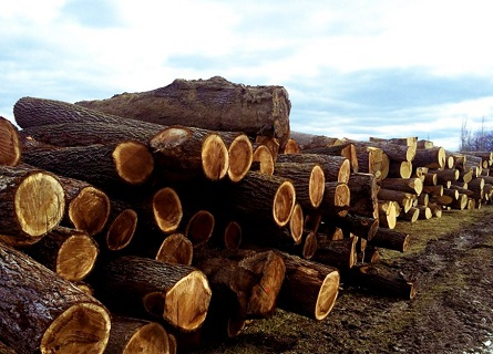 A pile of cut logs from Timber Buyers in Fulton County IL