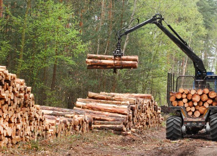 Licensed Timber Buyer Missouri