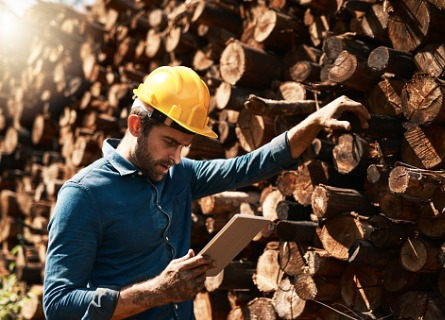 A logger inspecting wood, getting ready for Selling Timber in Missouri