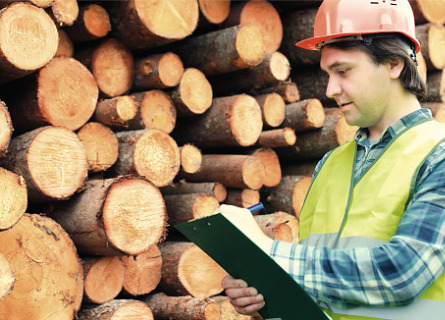 Timber Buyers in MO inspecting cut logs