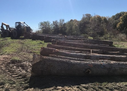 logs of trees in a row on the ground for Logging Companies Sangamon County IL