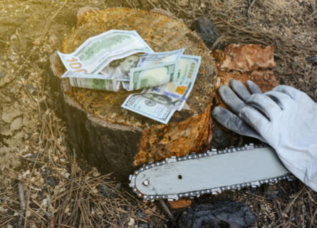 A chainsaw next to a pair of gloves and a freshly cut tree stump with money on it